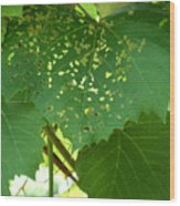 Lace In The Vines Wood Print