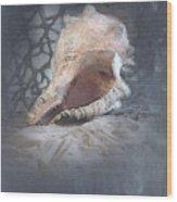 Lace Murex Sea Shell In Blue Wood Print