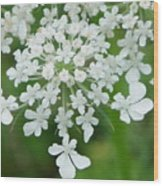 Lace On Stems Wood Print
