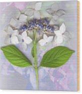 Lacecap Hydrangea Wood Print