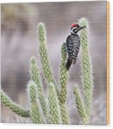 Ladder Backed Woodpecker Resting On Ganders Cholla Wood Print by Photo by Patricia Ware