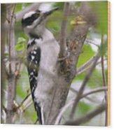 Hairy Woodpecker Wood Print