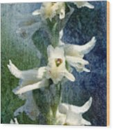 Ladies-tresses Orchid Wood Print