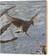 Lady Blackbird Wood Print
