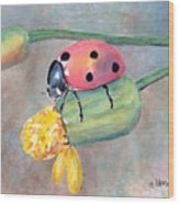 Lady Bug - Lady Bug... Wood Print