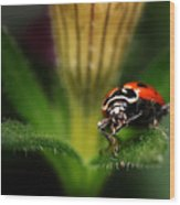 Lady Bug 1 Wood Print