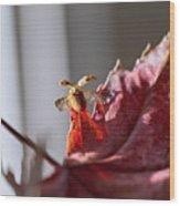 Lady Bug Flight Wood Print