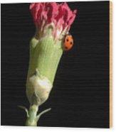 Lady Bug On Pink Flower Wood Print