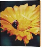 Lady Bug Walking The Line Wood Print