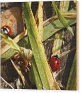 Lady Bugs Wood Print