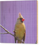 Rare Yellow Cardinal On A Cherry Branch Wood Print