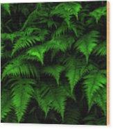 Lady Ferns Wood Print