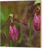 Lady Slipper Close-up  Wood Print