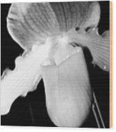 Lady Slipper Orchid Black And White Wood Print