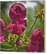 Lady Slipper Orchid Dan146 Wood Print