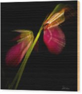 Lady Slippers As Running Shoes Wood Print