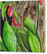 Lady Slippers Wood Print