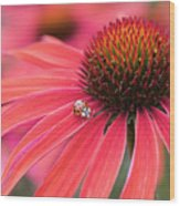 Ladybird And Echinacea Wood Print
