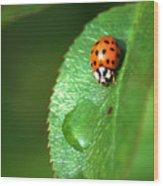Ladybird Wood Print