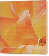 Ladybug Alights Wood Print