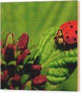 Ladybug Atop A Leaf Wood Print