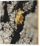 Ladybug Eggs Wood Print