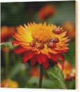 Ladybug Gathering Wood Print
