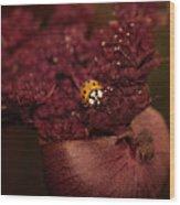 Ladybug In Chocolate Wood Print