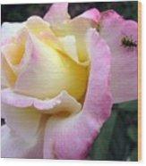 Ladybug Landing Wood Print