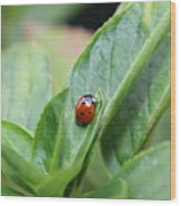 Ladybug On A Plant Leaf Wood Print