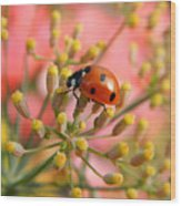 Ladybug On Fennel Wood Print