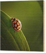 Ladybug  On Green Leaf Wood Print