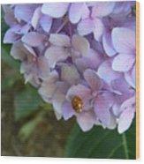 Ladybug On Hydrangea Wood Print