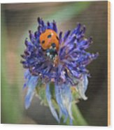 Ladybug On Purple Flower Wood Print