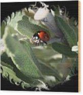 Ladybug On Sage With Swirly Framing Wood Print