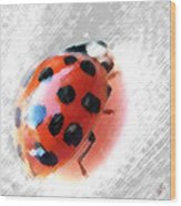 Ladybug Spectacular Wood Print