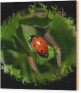Ladybug With Swirly Framing Wood Print