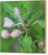 Ladybugs On Apple Blossoms Wood Print