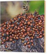 Ladybugs On Branch Wood Print