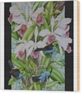 Laelia Purpurata Wood Print