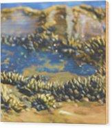 Laguna Beach Tide Pool Pattern 3 Wood Print