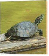 Laidback Turtle Wood Print