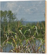 Lake Apopka Wood Print