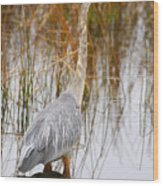 Lake Carmi Visitor Wood Print