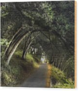 Lake Chabot Wood Print
