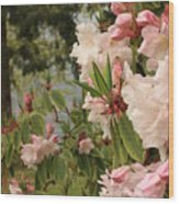 Lake Crescent Lodge Rhododendrons Wood Print
