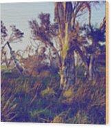 Lake Leschenautia Wood Print