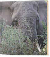 Lake Manyara Elephant Wood Print