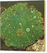 Lake Mermet Lily Pad Wood Print