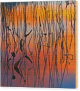 Lake Reeds And Sunset Colors Wood Print